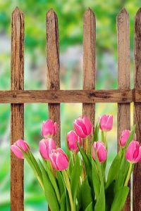 Getting More Out of Your Garden Fence