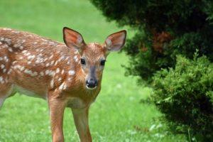 The Basics of Deer Fences